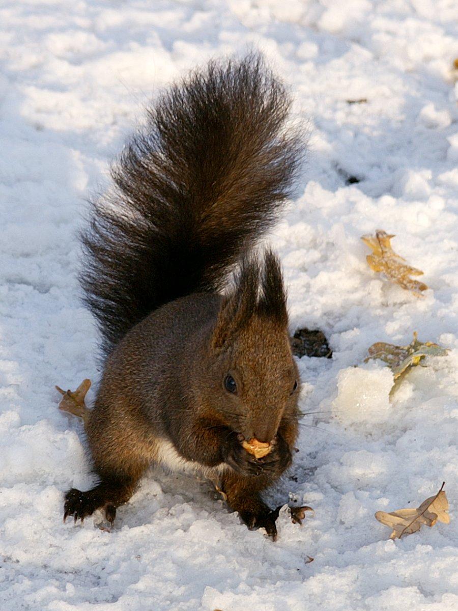 снежни животни