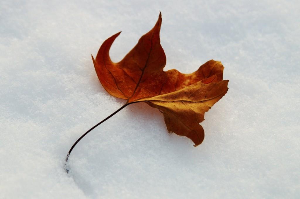 02_fire_snow_pict9861u
