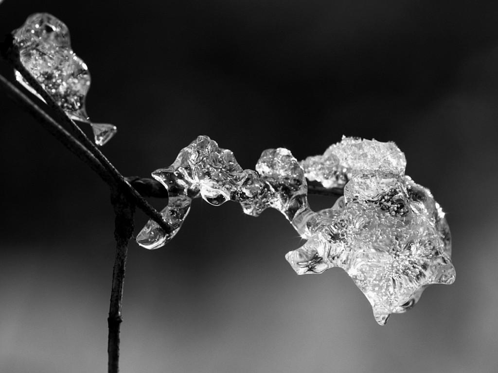 05_ice_pict9949bw
