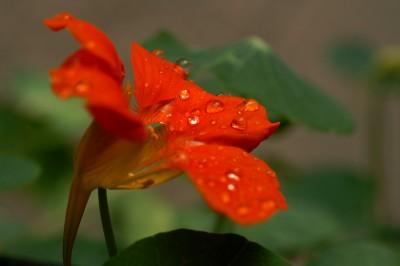 06_rain_pict4476