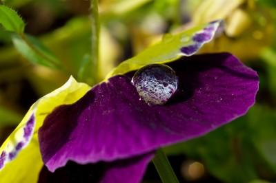 16_rain_pict1801u
