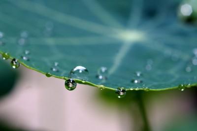 18_rain_pict2860