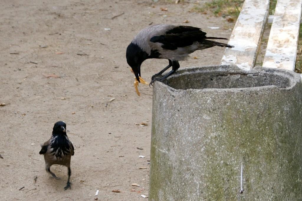 01_birds_4637