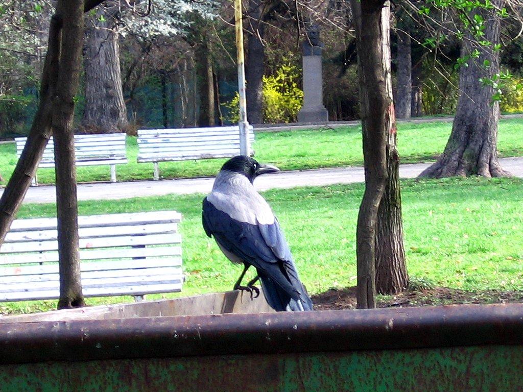 02_birds_1422