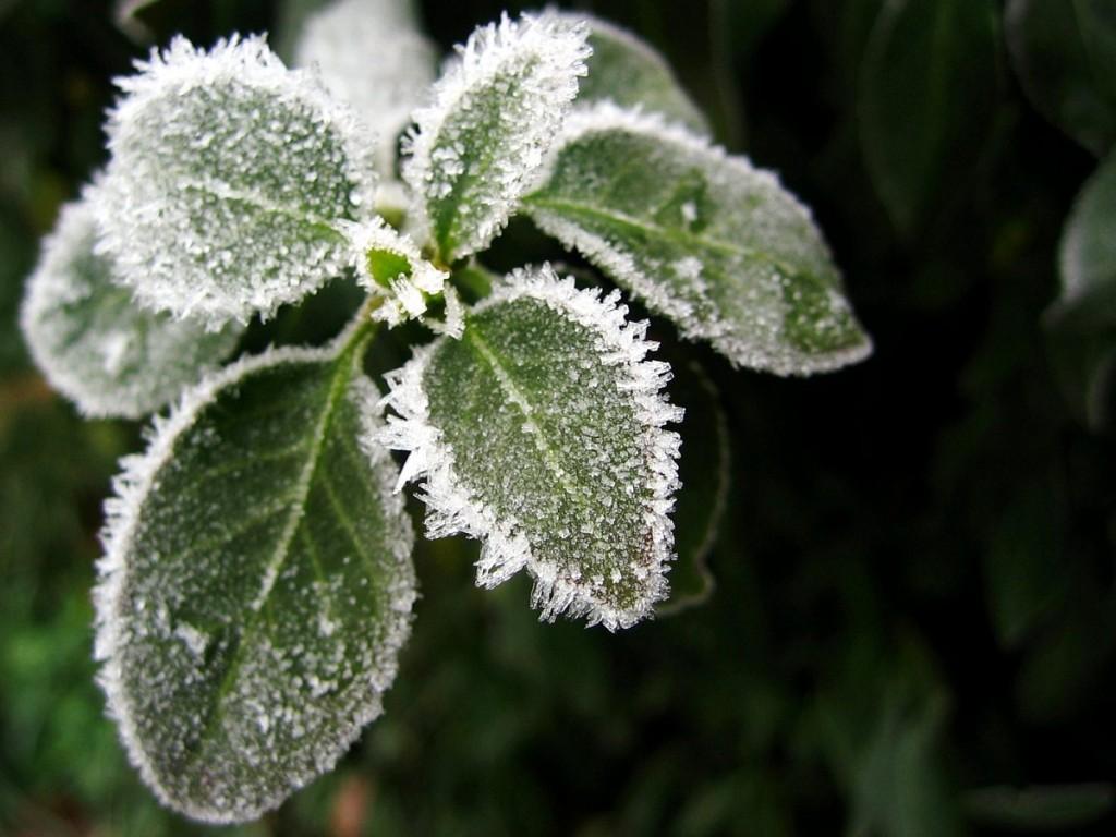 02_ice_04