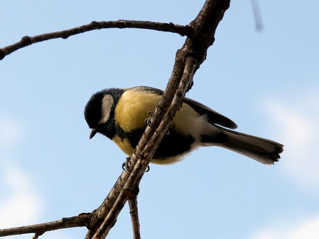 05_birds_PICT9838
