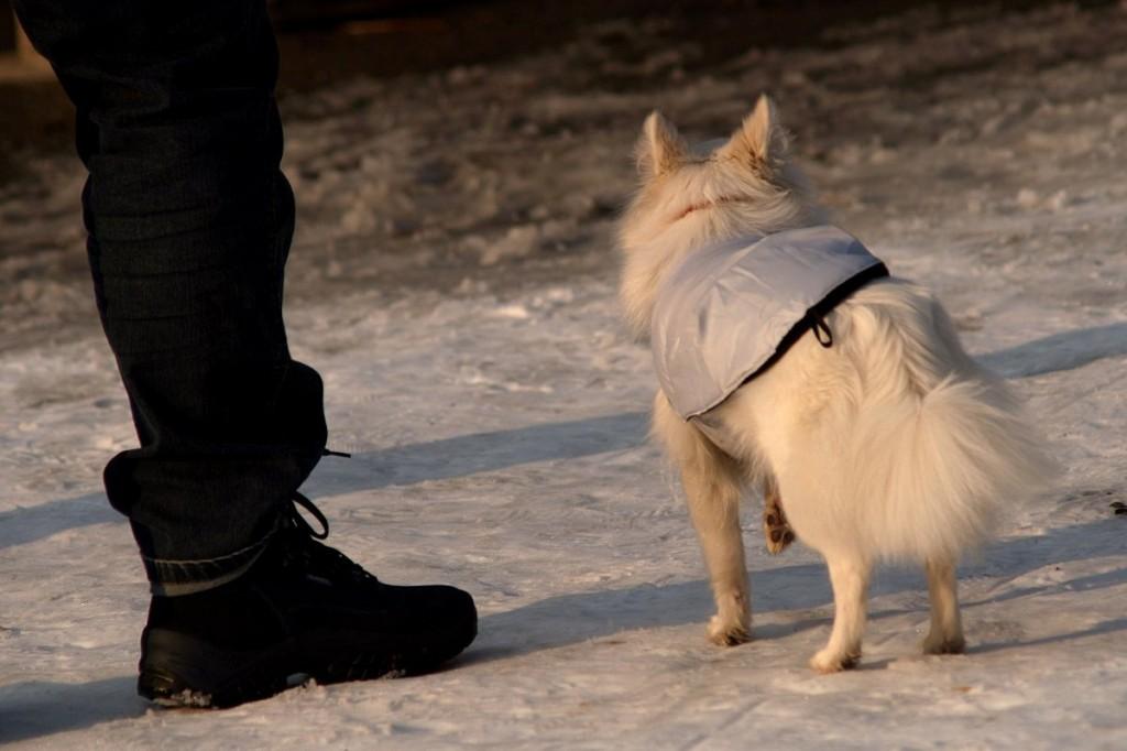 01_dogs_pict7491u