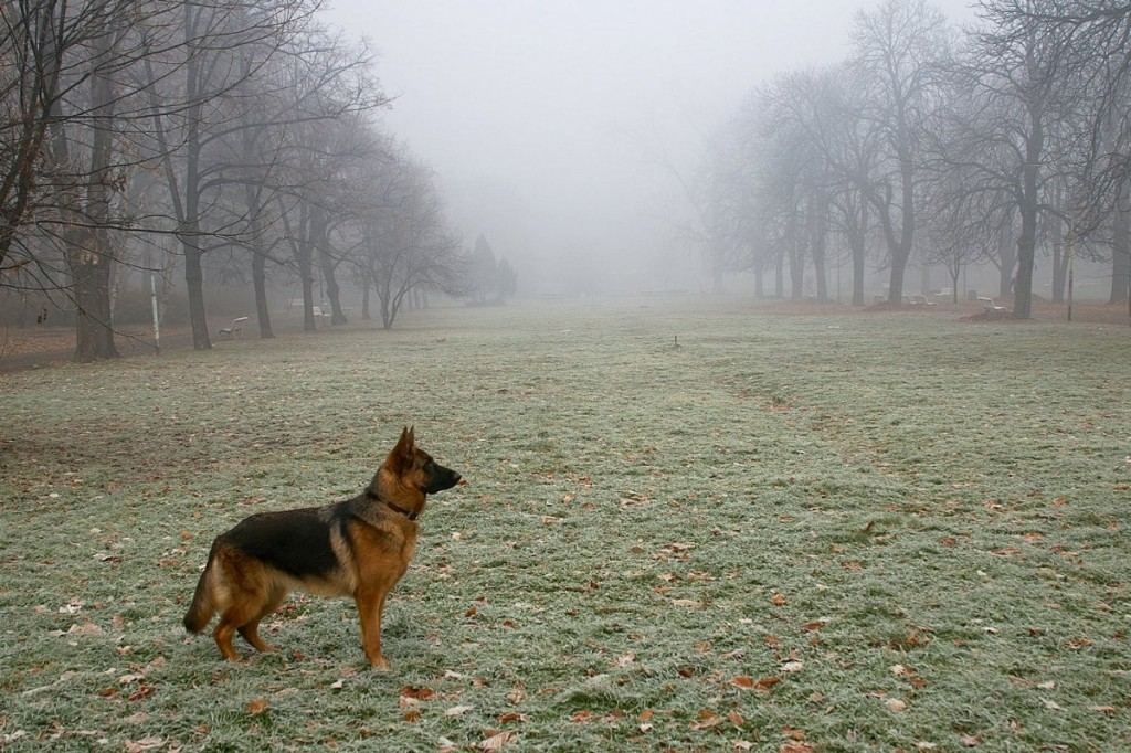 02_dogs_PICT8275