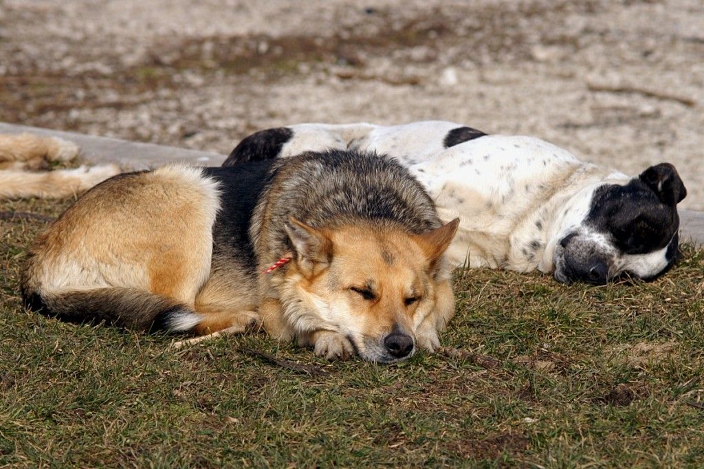 05_dogs_PICT8148
