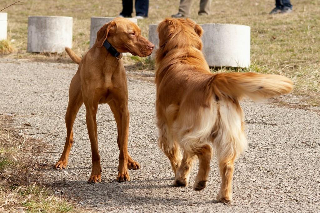 06_dogs_PICT8099u