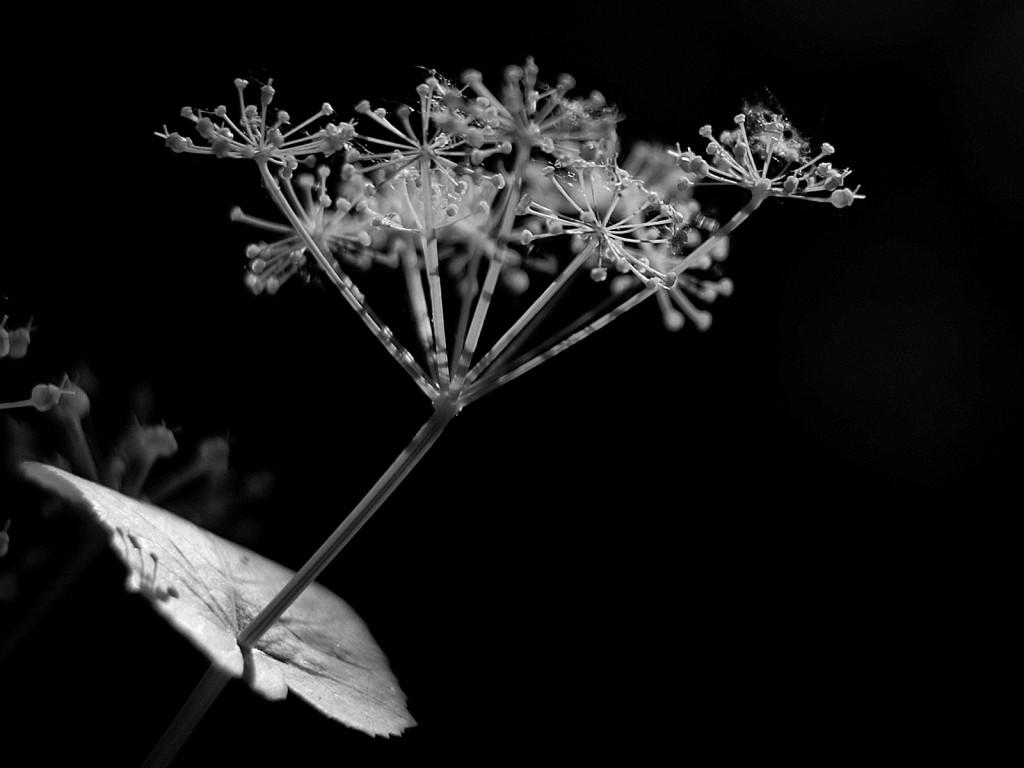 flor fragile