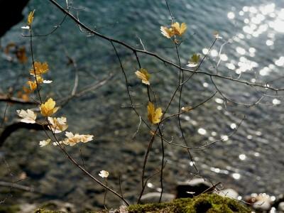 river & sun