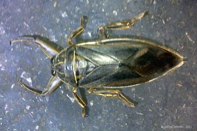 10 см буба