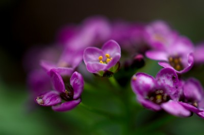великолепие в лила