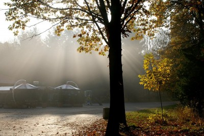 neblina dorada