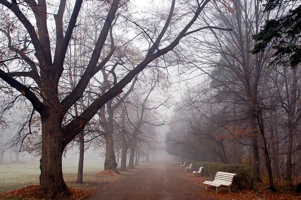 статуи в мъглата