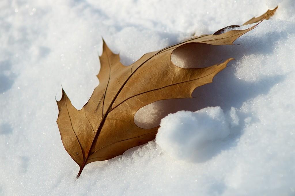 топла длан в снега