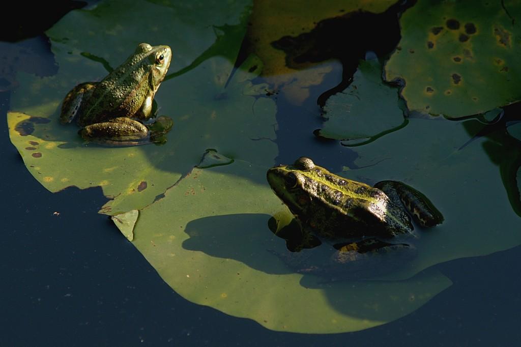 пролетни жабешки неволи