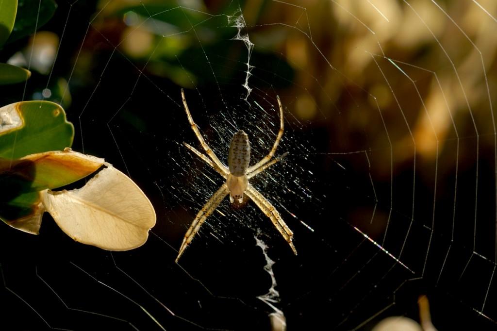 паяк в готовност за прегръдка
