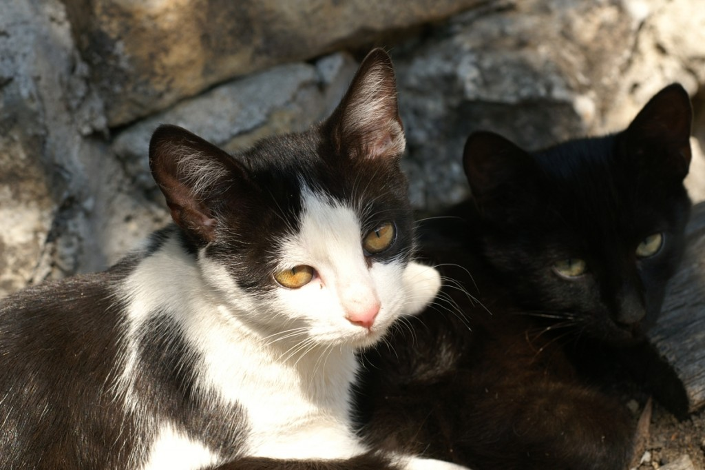 котки на калъп