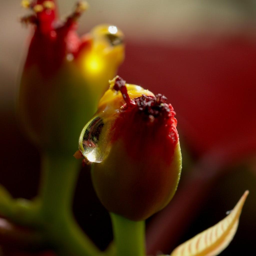 entre dos flores