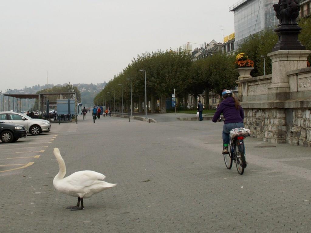 Cygnus & cycler
