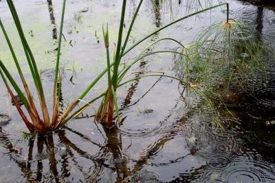 езерце и дъжд
