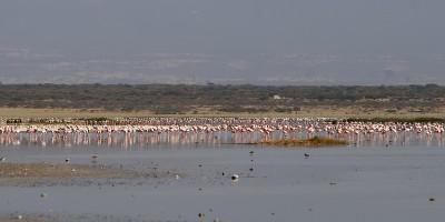 Abijata Lake