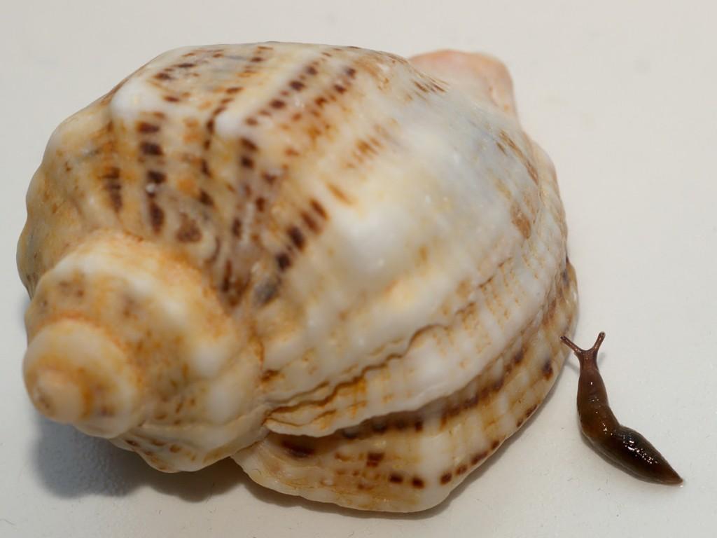 slug & shell