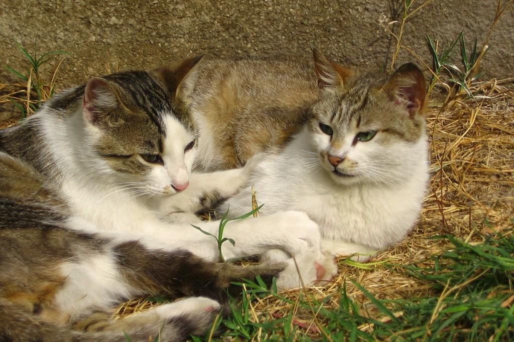 Котаци