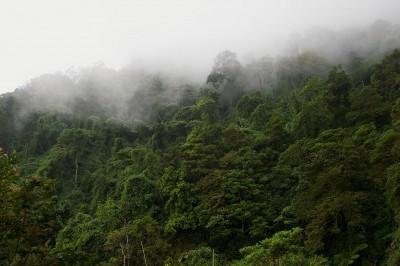 влажна тропическа гора