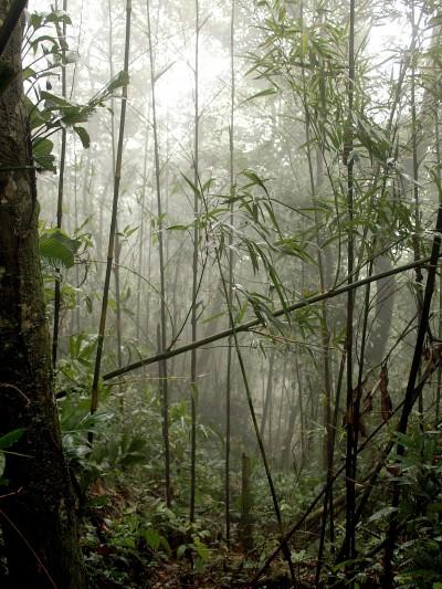 сред джунглата