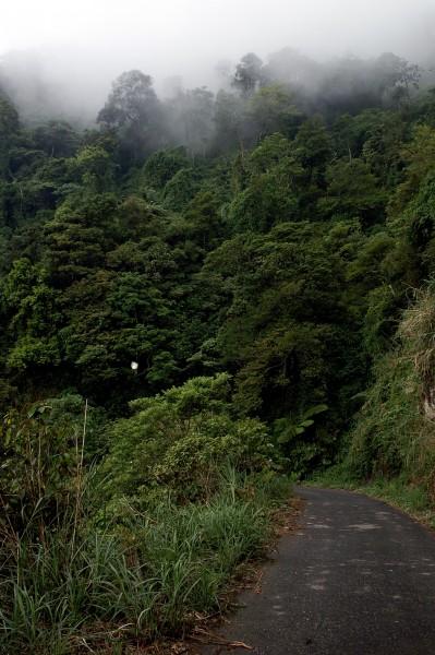 в пазвите на джунглата