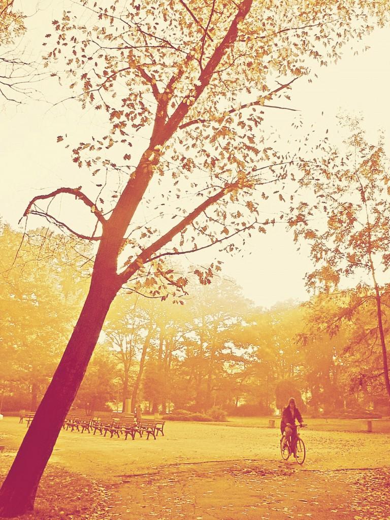 есен, шарколес