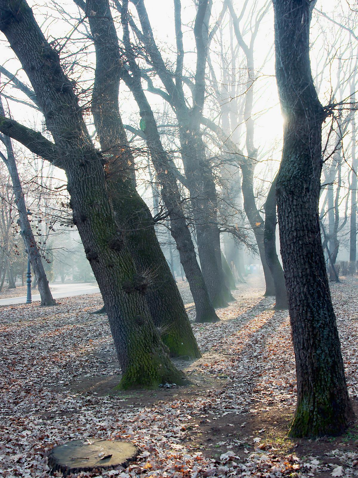 стражи в мъглата